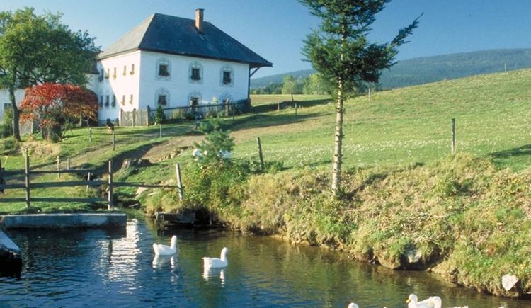 Wanderung durch eine noch unberührte, bäuerliche Landschaft im Dreiländereck Oberösterreich/Bayern/Südböhmen.