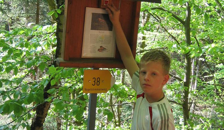 Kind vor einer Informationstafel im Wald am Vogelstimmenweg in Peilstein.