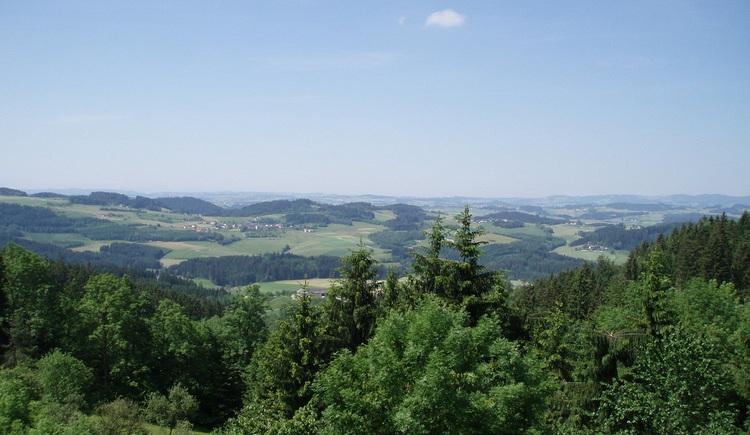 Ausblick auf dem Weg zum Stefanstritt. (© Haus Pürmayr)