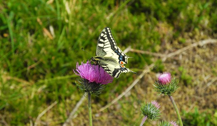 (© Foto Nationalpark Kalkalpen)