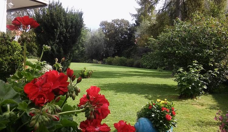 Blick in den Garten.