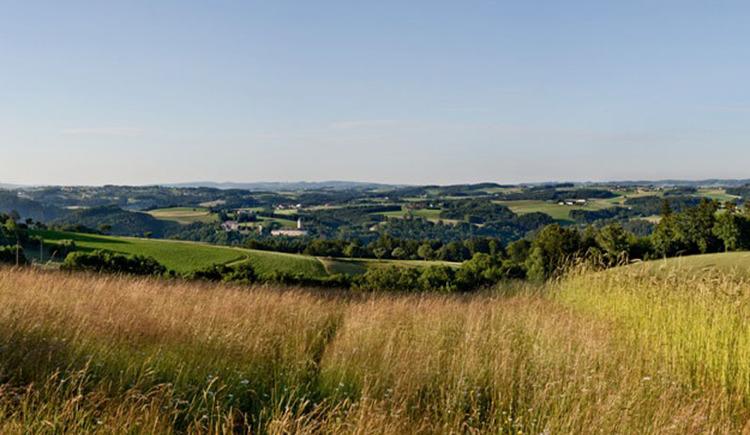 Panoramablick Dallinger