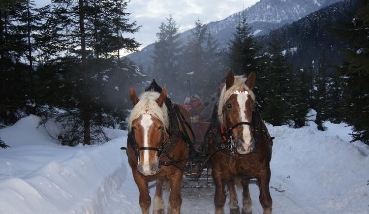 Pferdeschlittenfahrten im unserem Winterwald (© Knappe-Benesteem)