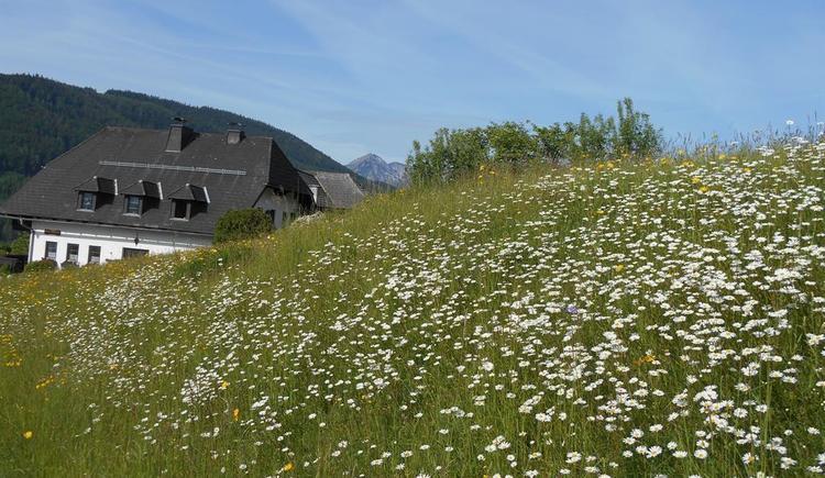 Blumenwiese mit Haus, im Mai (© Ferienwohnung Burgi)
