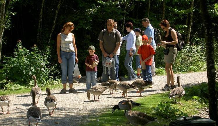 Ausflug für die ganze Familie (© Wildpark Cumberland)