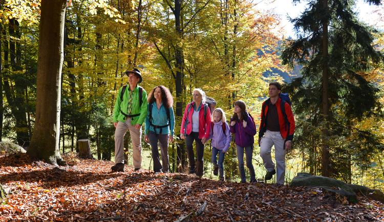 Wandern am Fitnessweg Predigtberg