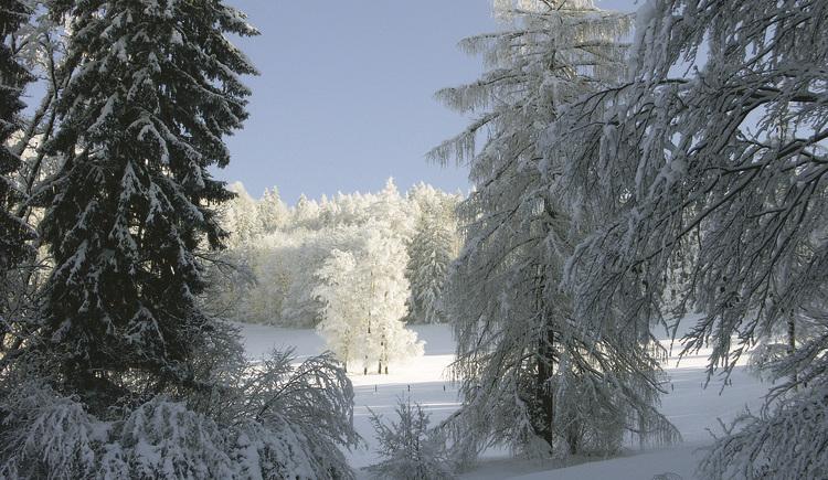 Winter in der Krems (© Werner Bejvl)