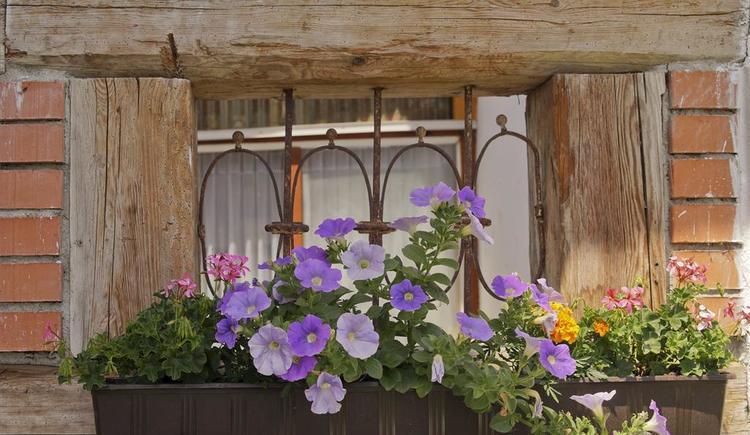 Obermayrgut Fensterblick