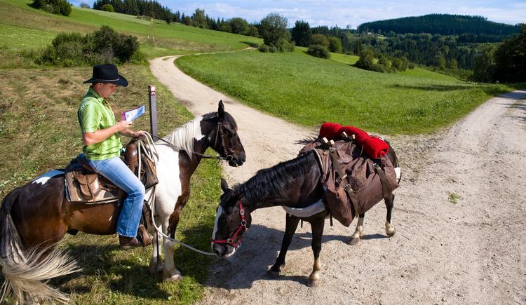 Reiten (© OÖ.Tourismus/Erber)