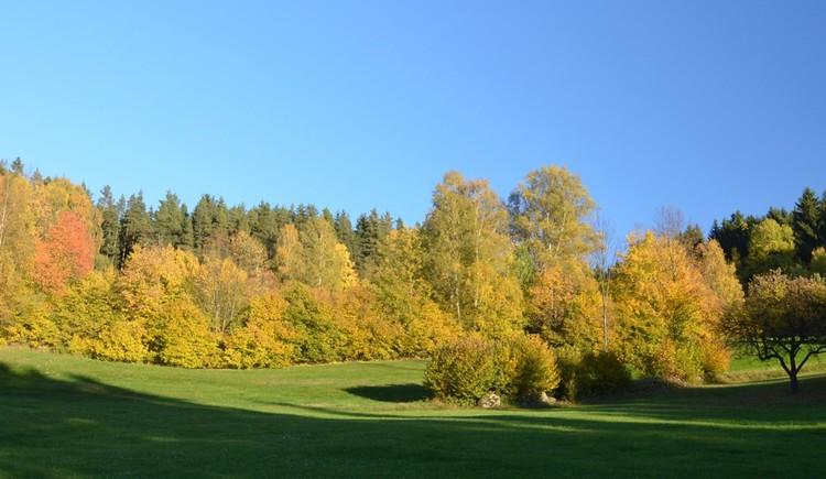 Herbstlicher Laubwald (© Wiederstein-Graser)