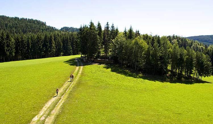 Wandern in Oberoesterreich (© OÖ. Tourismus/Erber)
