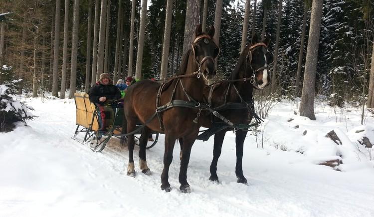 Pferdeschlittenfahrten (© Reingruber)