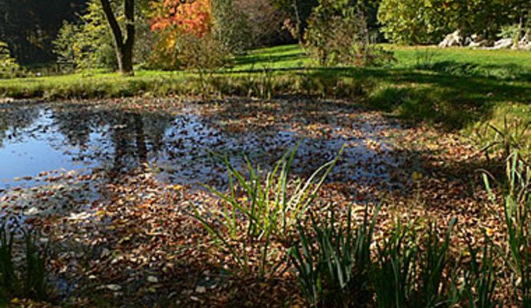 Botanischer Garten. (© Marktgemeinde Frankenburg)