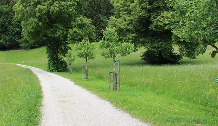 Baumlehrpfad entlang der Strecke (© Naturfreunde Internationale)