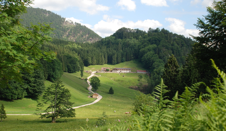 Alm Landschaft