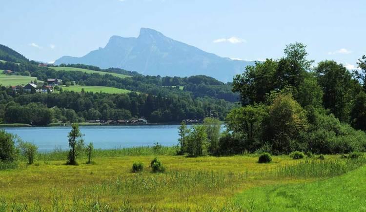 Der Irrsee, umgeben von Wiesen und Wäldern, im Hintergrund der Schafberg. (© www.mondsee.at)