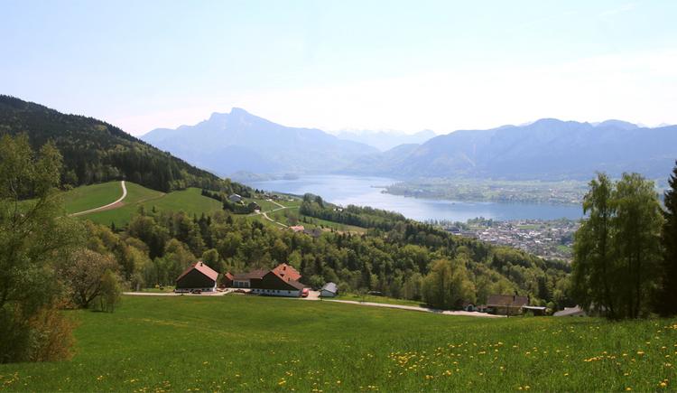 Blick von die Wiese auf einen Bauernhof, im Hintergrund die Landschaft, Berge. (© Tourismusverband MondSeeLand)