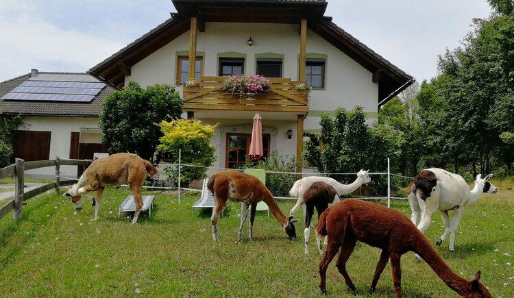 Lampaka Ranch_10 (© Lampaka Ranch)