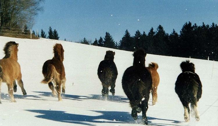 Isl\u00e4nder im Winter (© Mag. Gaby Pilger)