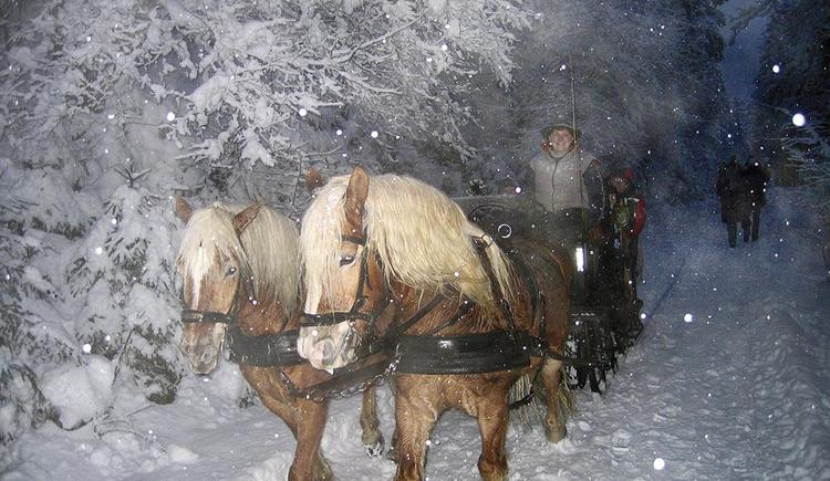 Pferdeschlittenfahrt direkt Hotel Garni Wallner
