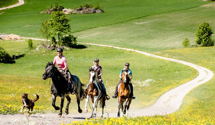 Wanderreiten im Pferdereich Mühlviertler Alm (© Wanderreithof Kern/Erber)