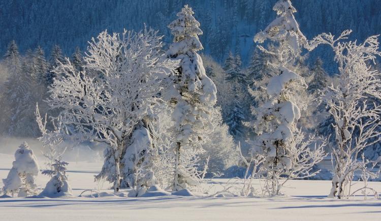 Tiefverschneite Winterlandschaft entlang der Tiefbrunnau Loipe (© Tourismusverband Faistenau / Josef Rehrl)