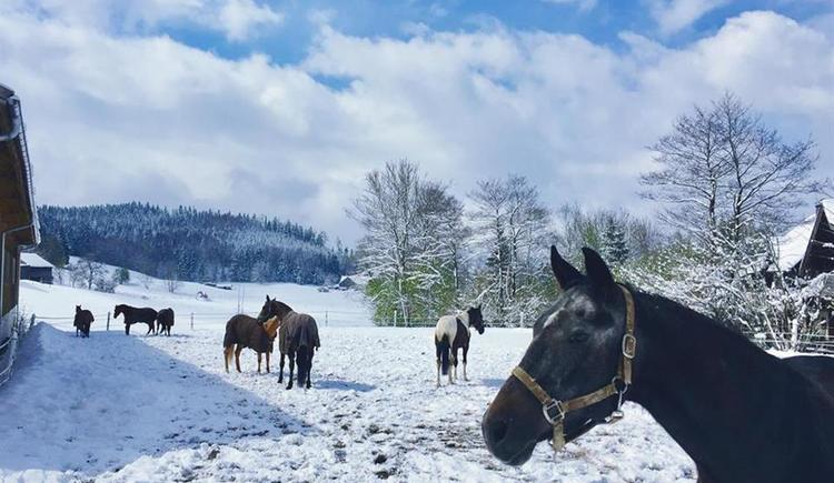 Pferde auf der Weide (© Cold Creek Ranch)