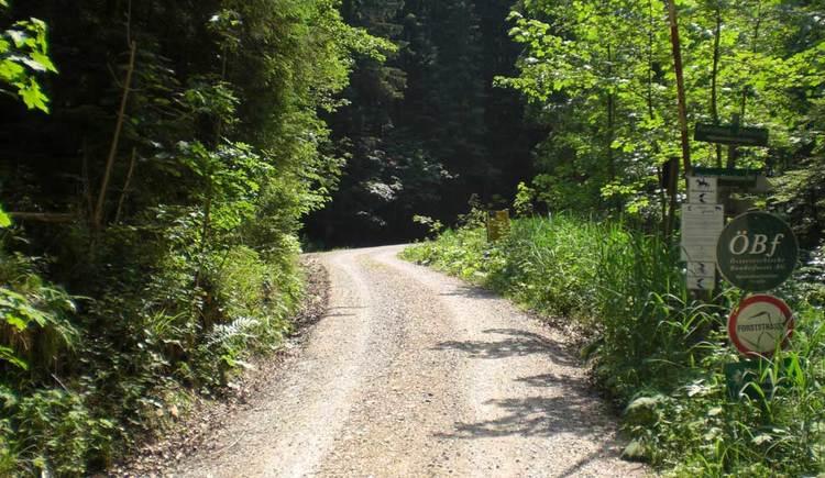 Blick auf eine Forststraße umgeben, die durch eine Wald führt. (© www.mondsee.at)