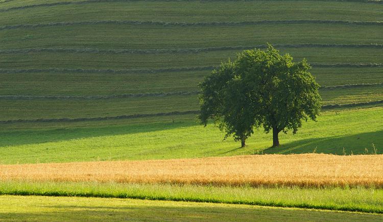 Landschaft (© Innviertel Tourismus/Litzlbauer)