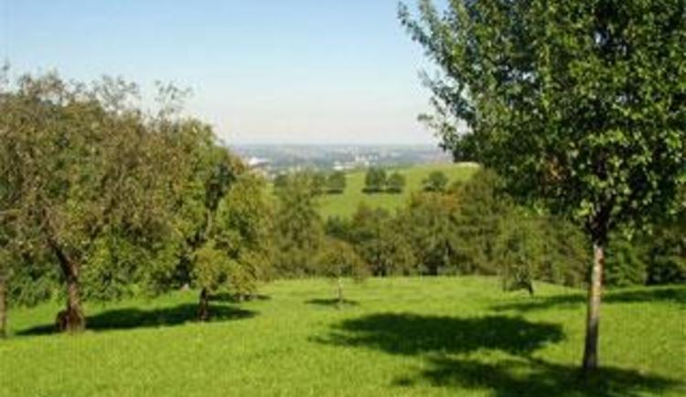 Obstgarten (© Bauernhof Obere Wolfsgrub)