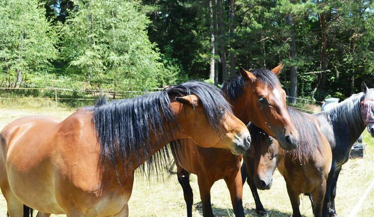 Pferde auf dem Herzogenhof