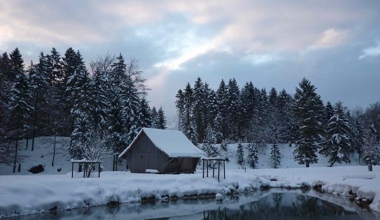 Winterimpressionen (© Bild Cumberland Wildpark)