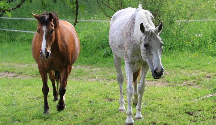 2 Pferde (© Privat)