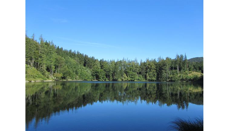 Blick auf den See, im Hintergrund Bäume