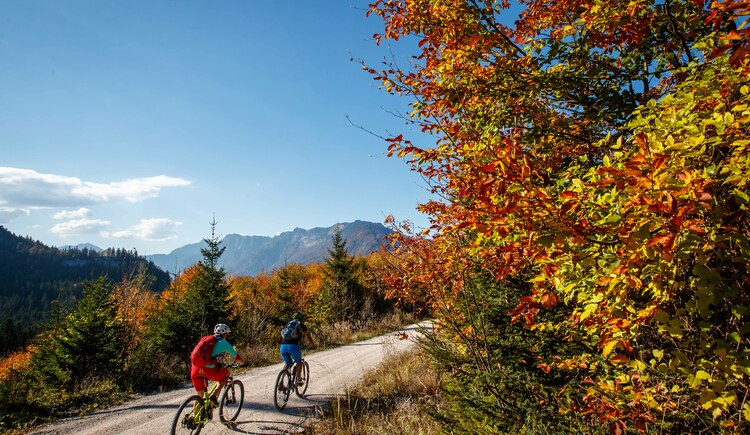 Beautiful mountain bike tours in the Indian Summer in the Gosau Valley. (© bikeboard.at Erwin Haiden)