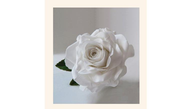 Weiße Zuckerrose (© DI (FH) Kathrin Walter)