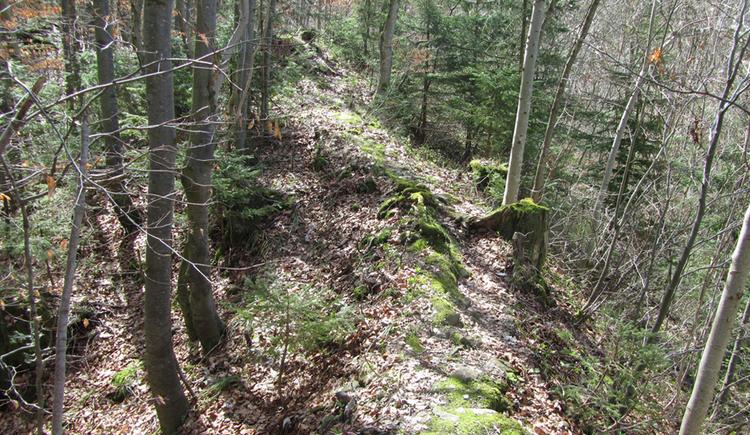 Wenige Überreste einer Ruine im Wald