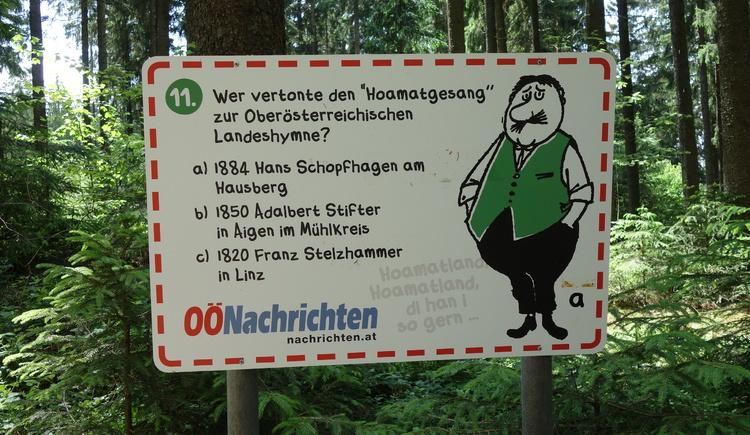 #11 (© Johann Mülleder)