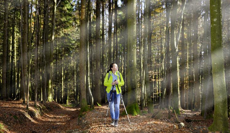 Wandern am Weitwanderweg im Wald Etappe 1