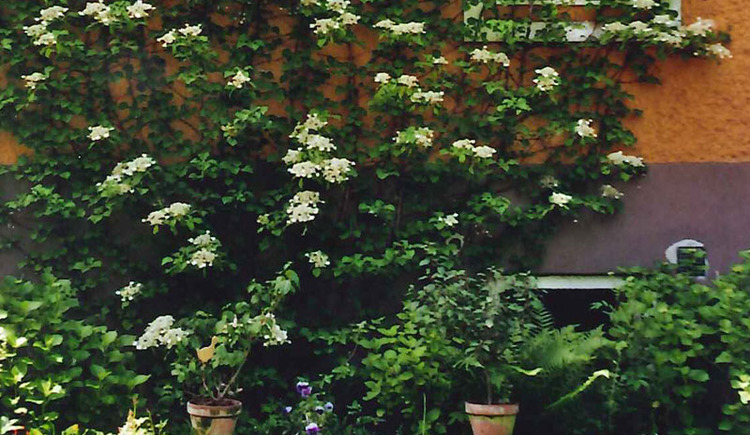 Garten. (© Haus Hlozanek)
