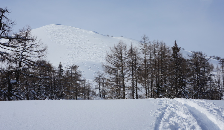 Rücken vorm Gipfelhang. (© WTG)