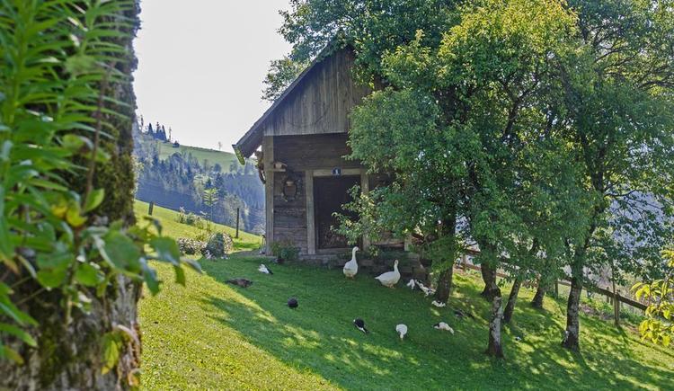 Gaense und Enten (© Meixner)