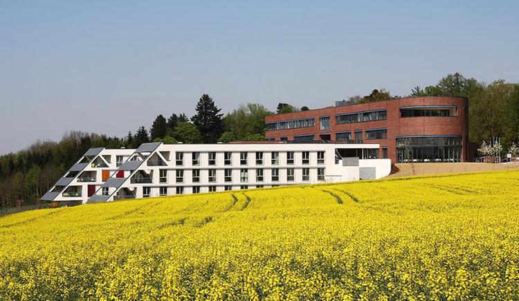 Sonnenpark mit Rapsfeld.jpg