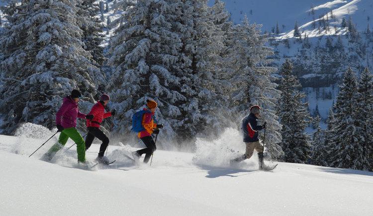 Waldness im Almtal - Schneeschuhwandern. (© Tourismusverband Almtal-Salzkammergut, Foto Nadine Bammer)
