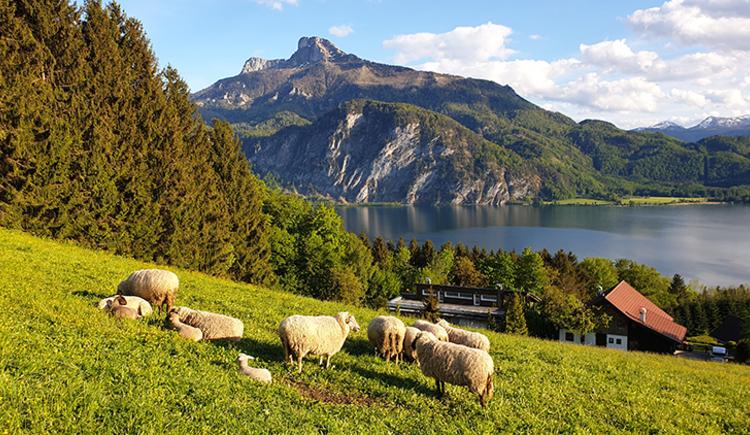 Bergen - auf dem Weg zum Hochplettspitz (© TVB Mondsee-Irrsee)