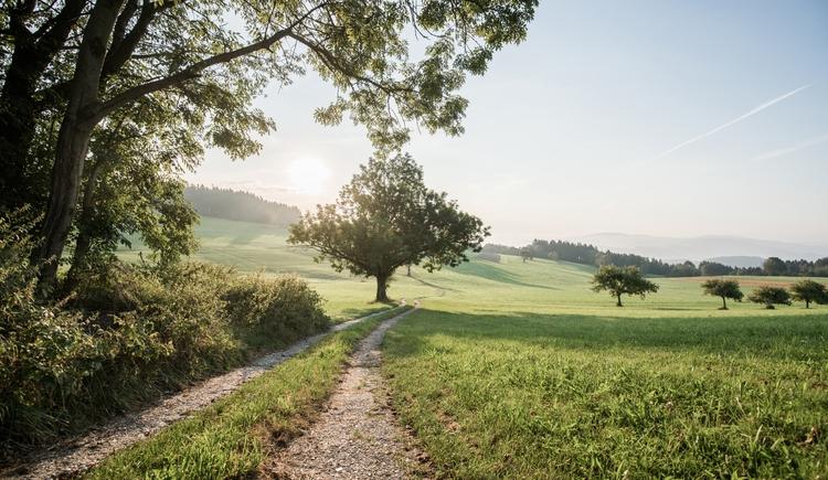 landschaft-mit-feldweg-c-ober-sterreich-tourismus-gmbh_robert (© ober-sterreich-tourismus-gmbh_robert)