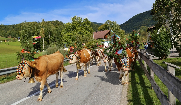 ""\""""Almabtrieb"""" - ceremonial driving down of cattle from the mountain pastures into the valley in autumn""750|435|?|en|2|be35b3b0470fe96ba8fe0b897c6b9484|False|UNLIKELY|0.3355970084667206