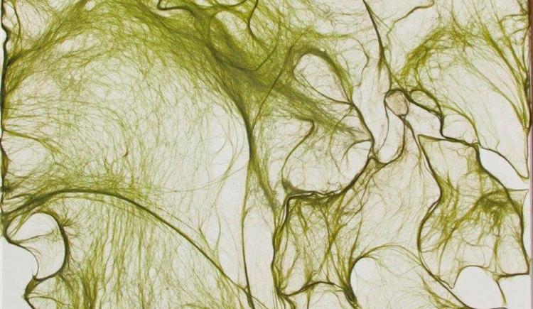 Algenkunstwerk (© Heidi Zenz)
