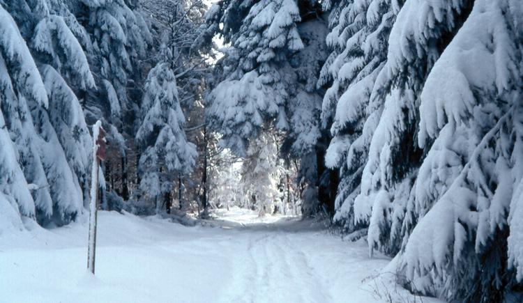 Winterwanderweg (© TV Pfarrkirchen)