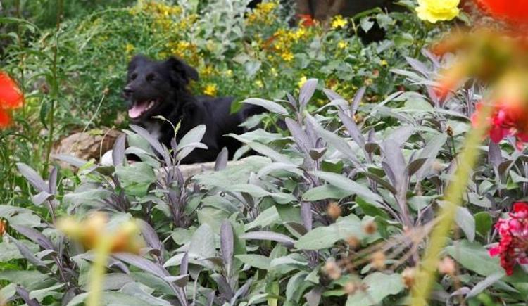 unser Hund Fritzi im Kräutergarten